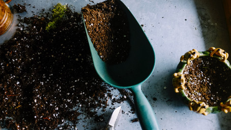 Top 5 Gardening Tips to level up your small space… on a budget!