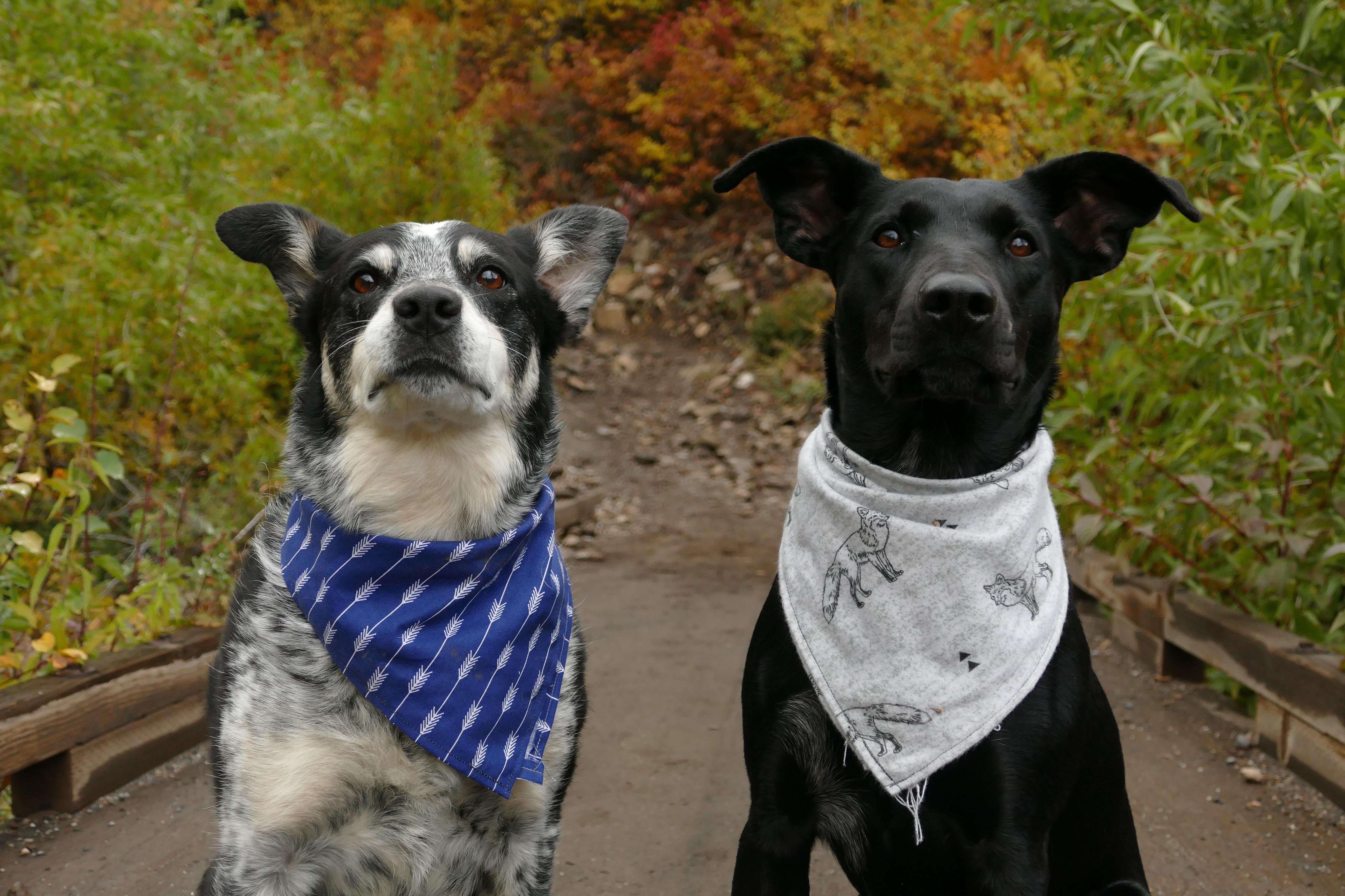 Dog Bandanas