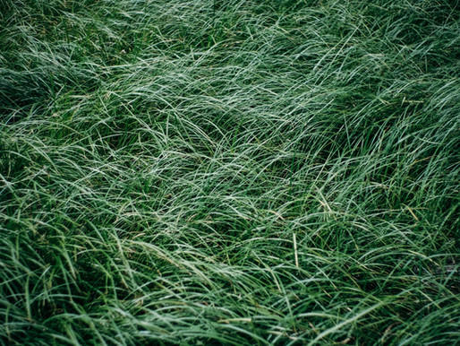 Is Your Lawn Under-watered? And Why Overwatering May Be Worse