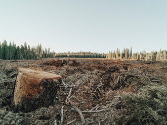 Is Deforestation Our Biggest Threat? And What Can We Do About It?