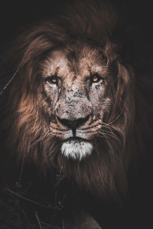 59 Lion beast ideas