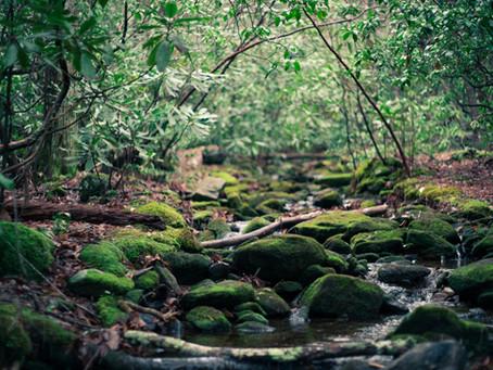 Upcoming Event: Shinrin-Yoku, Forest Bathing