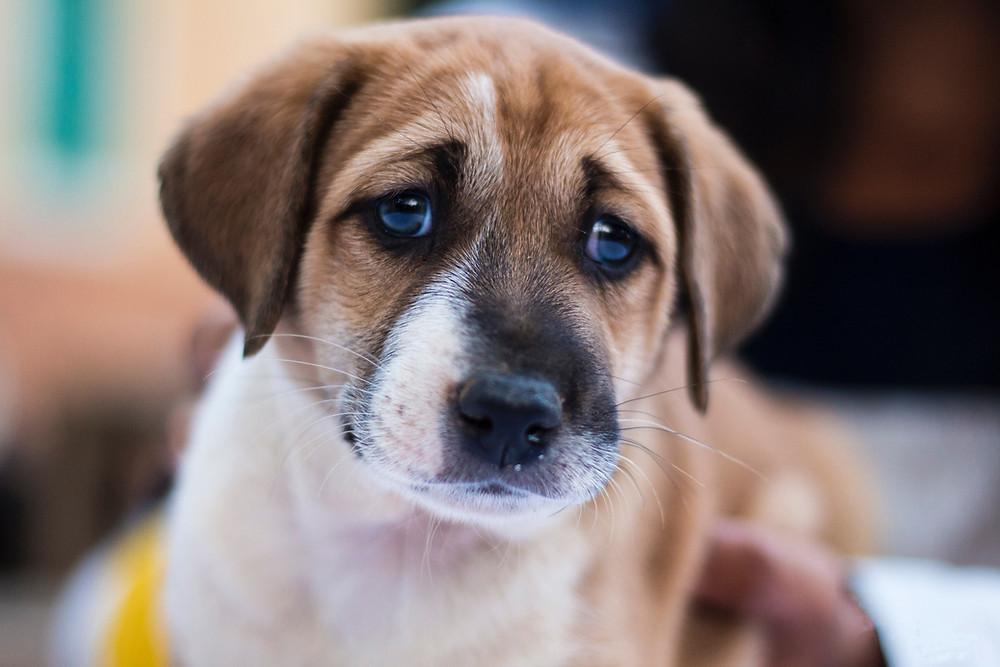 puppy onzeker