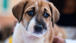 Enquiries ongoing following reports of dog thefts