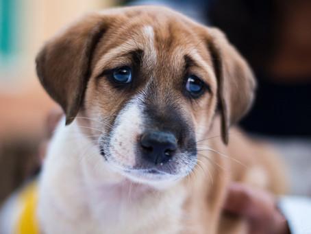 Een pup adopteren