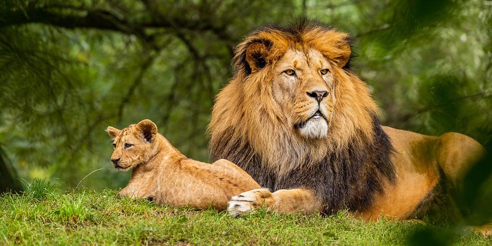 ライオンのお面を作って踊ろう (3-6歳向け) 【Kazuho】