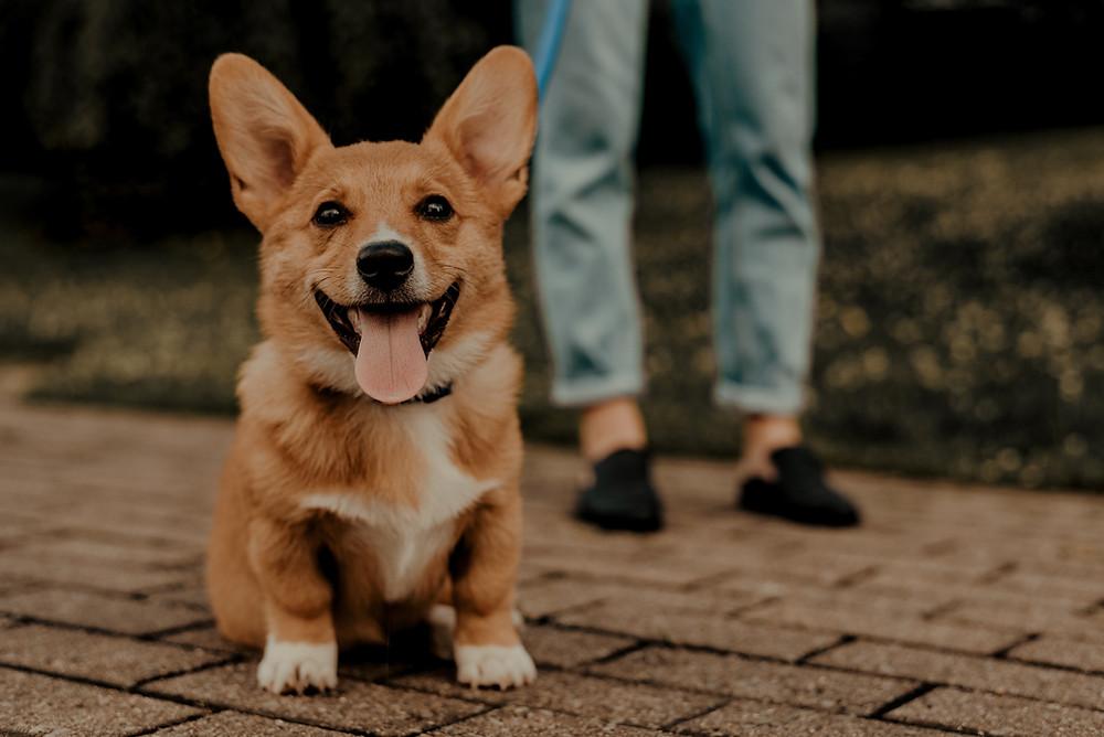 Dog homeopathy