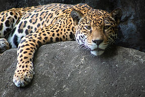 Caring for injured wild animals