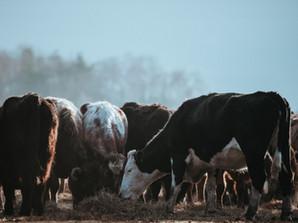 Cambiamenti climatici e benessere animale: riflettiamoci assieme