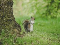 Tips & Tricks: Wildlife