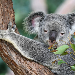 December - Australia #3