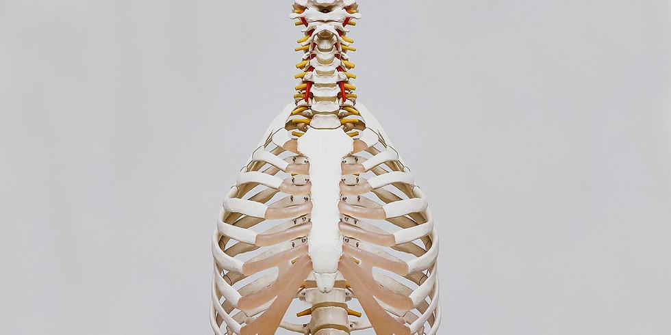 Workshop: Anatomy & Physiology of Yoga
