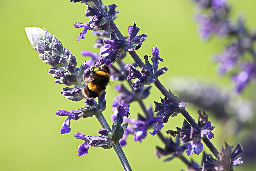 Gardening tips, Transform your garden