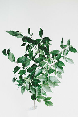 Green leaves against an off white background