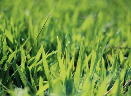 Eat green und lass die Sonne in Dir scheinen!