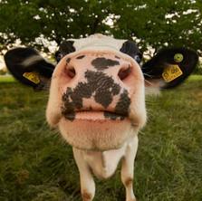 The Voiceover Farm: E-I-E-I-O