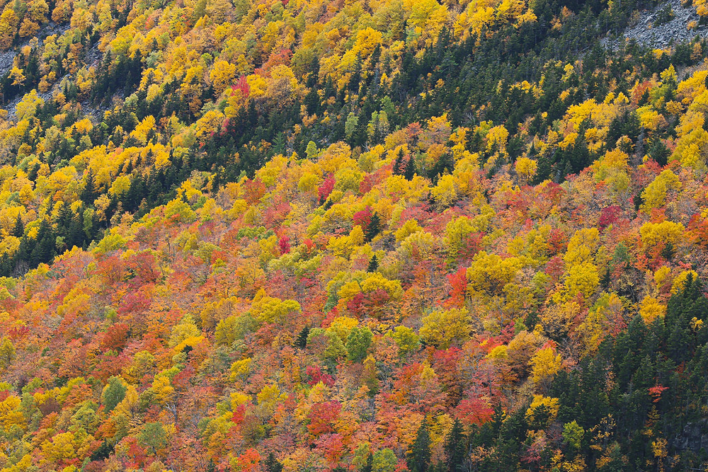 Golden fall colors in the mountains.