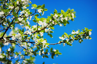 Tree branches with flowers
