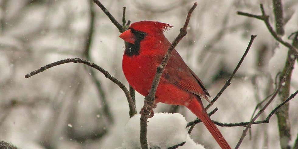"""The Christmas Bird Count Marathon"" - Building Better Birders Series"