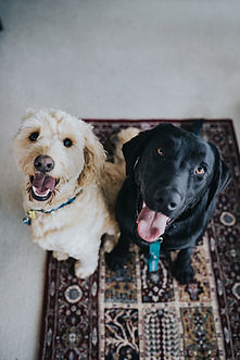 happy dogs at dog obedience school