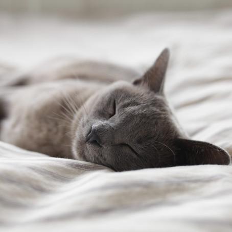 5 Simple Tips for Better Sleep