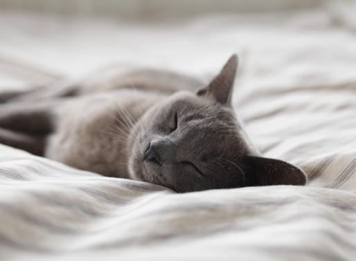 自行入睡的概念及技巧(下篇)