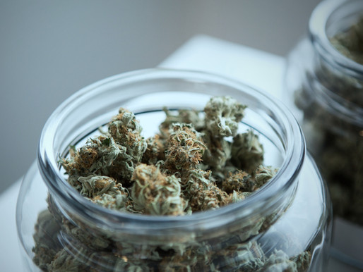DEA Sued for Not Processing Cannabis Research Cultivator Applications