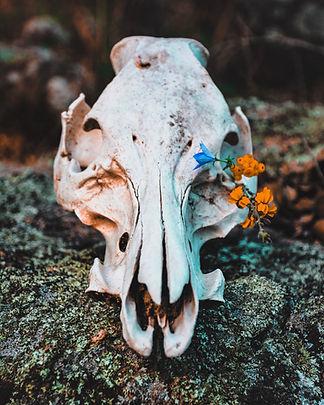 Image by Emily Goodhart