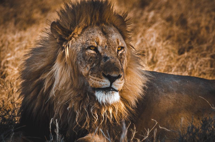 Namibia safari lions