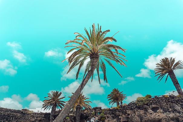 Image by Javier Martinez