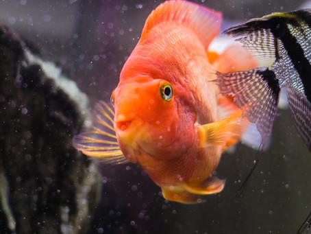 Freshwater Fish 7/4