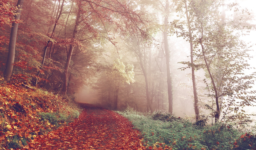 Misty Autumn morning along a path with fallen leaves.