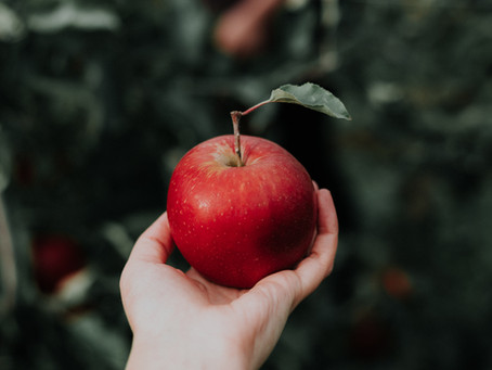 8 Places To Go Apple Picking Around Milwaukee