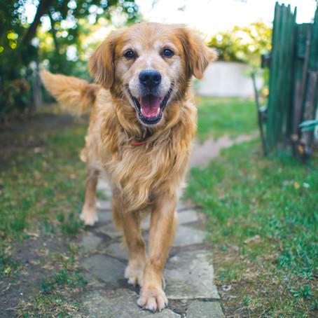 SHOULD MY SENIOR DOG BE ON A SENIOR DOG FOOD?