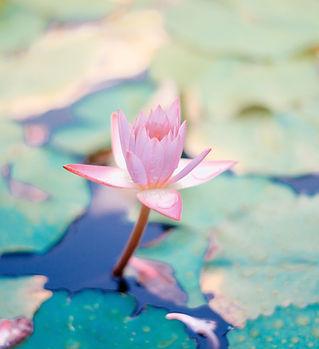 Image by Saffu