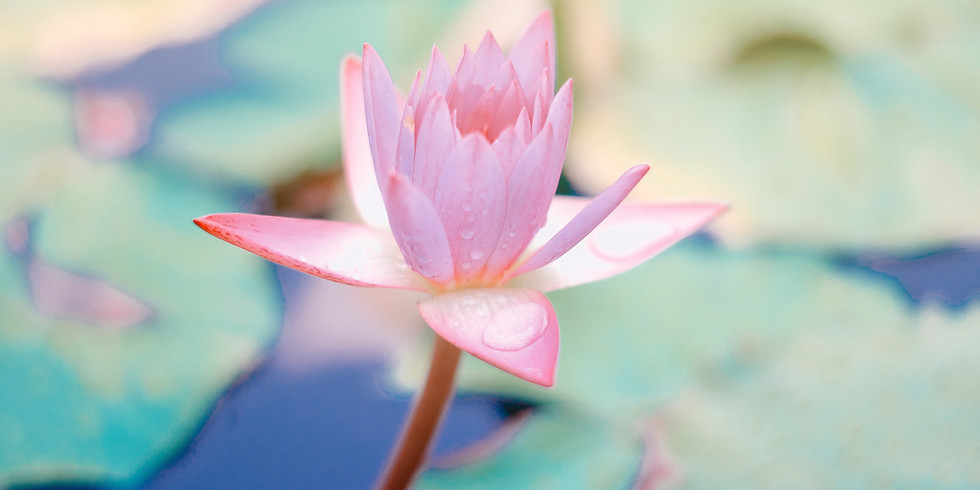 YIN YOGA: A SOMATIC APPROACH [CPD COURSE]