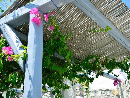 Faire de l'ombre sur votre jardin: les atouts de la pergola végétale