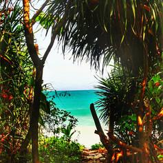 andaman palm trees