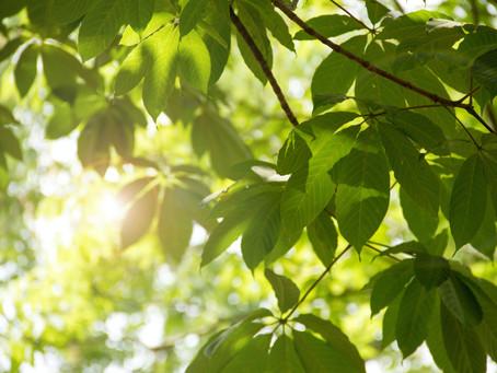 What a Leaf Can Teach You