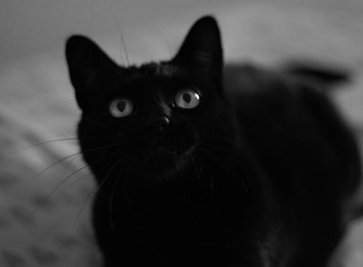 Les chats noirs: Mythes et réalité