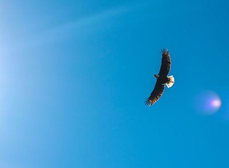 Eagle Speaks