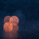Image de Osman Rana