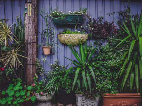 Trucuri pentru grădina urbană organică