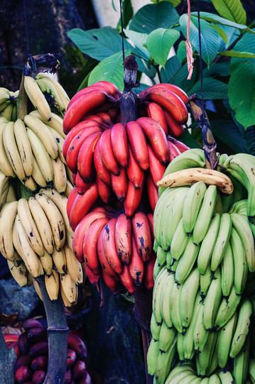 Régime de bananes, photo de Ovidiu Creanga