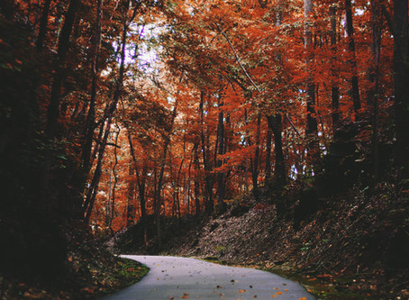 Staff Q&A: Anthony's Favorites of Fall!