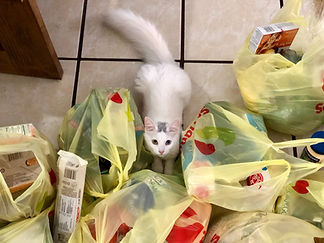kitten on kitchen floor surrounded by yellow plastic grocery bags