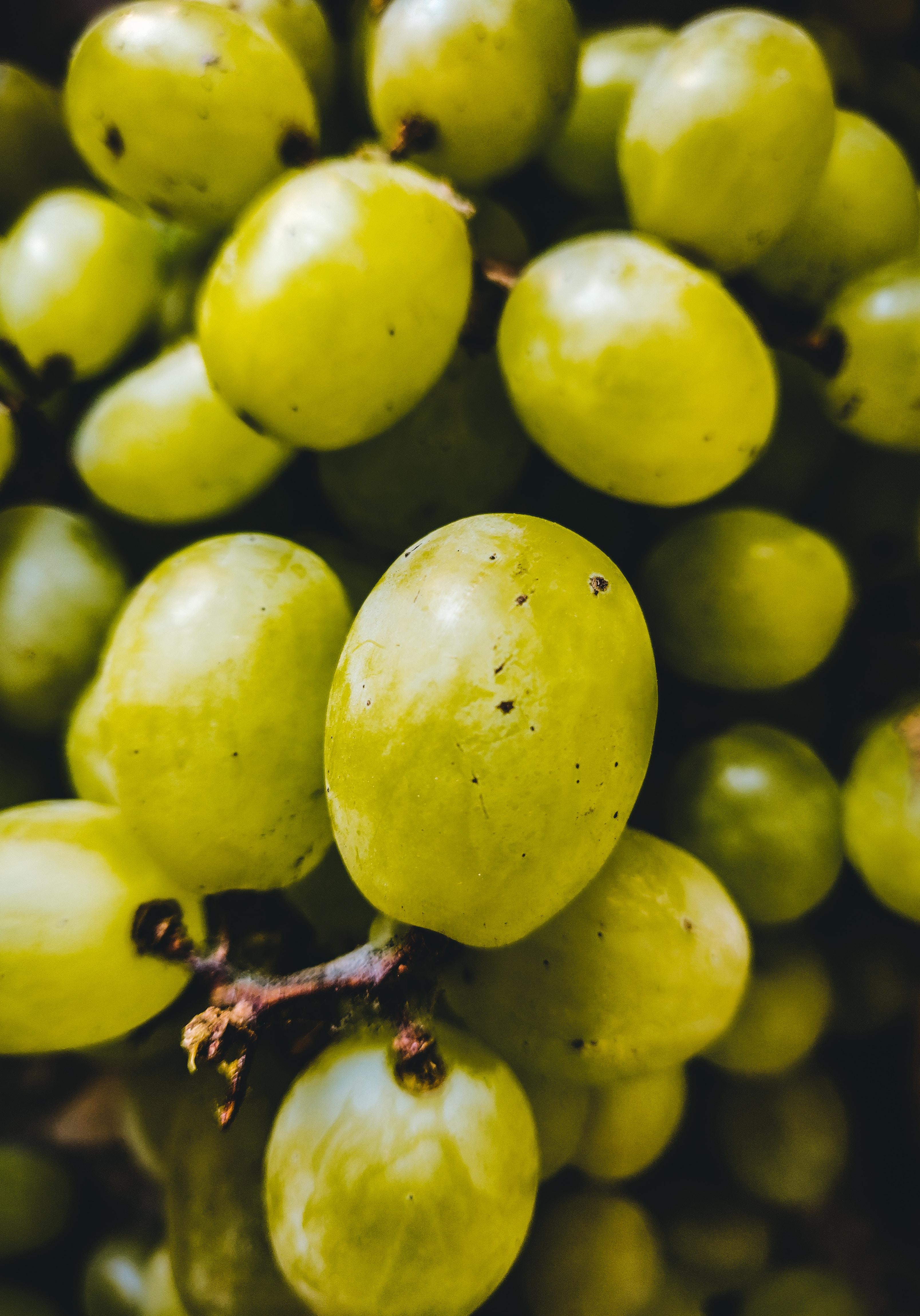 Sweet Carnival Grapes