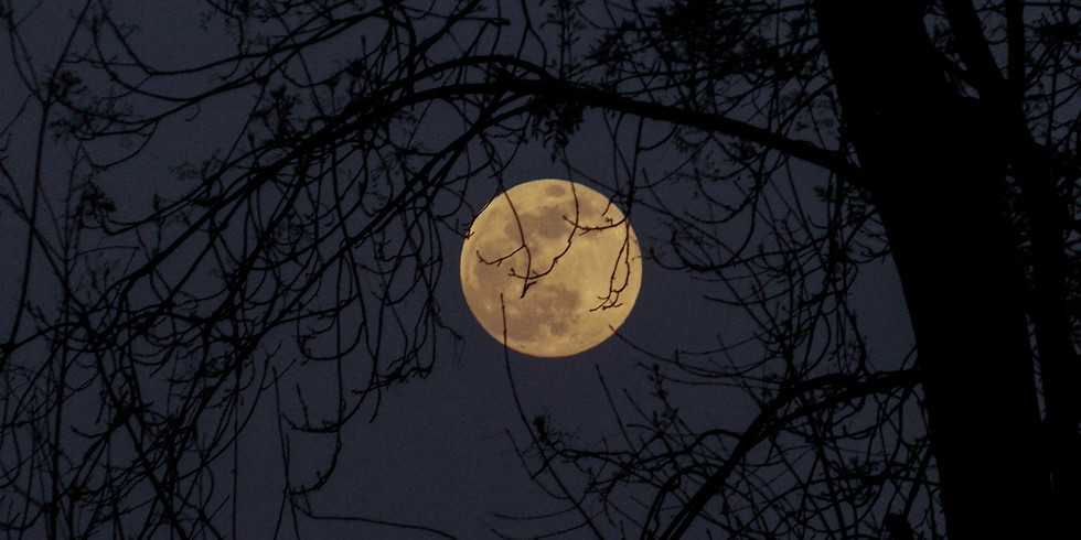 Carver Park Full Moon Walk w/Minnetonka Comm. Ed.