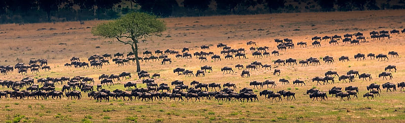Voyage en famille en Tanzanie