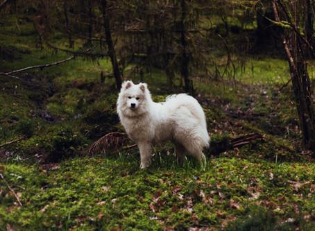8 najstarijih pasmina na svijetu